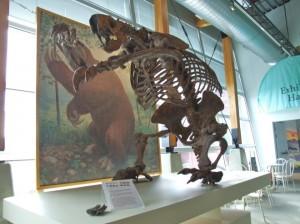Megalonyx-skeleton-660x495