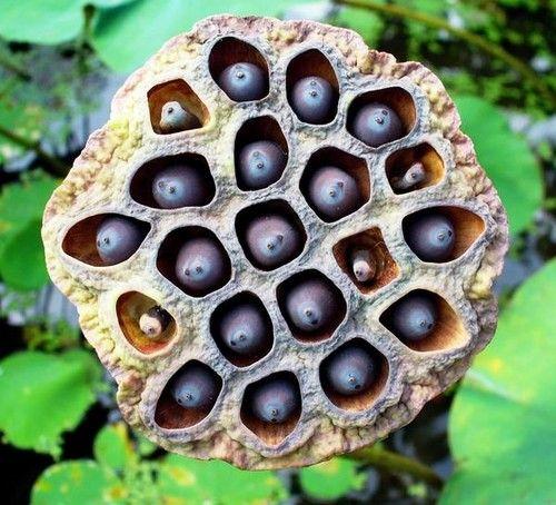 26ff1ee40da090a7d8b52be3e1a2beaa--pod-lotus